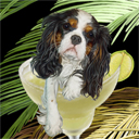cavalier king charles spaniel dog art and margarita dogs, cavalier king charles spaniel dog pop art, dog paintings, party dogs and margarita pet portraits in colorful original dog art and fine art dog prints by artist Jane Billman and Gregg Billman